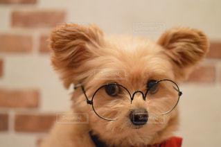 犬用コスプレの写真・画像素材[2445947]