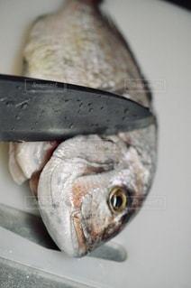 天然鯛を捌くの写真・画像素材[3472055]