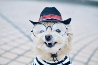 どう似合う?帽子とメガネでインテリの写真・画像素材[3716135]