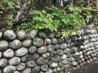 玉石垣の道の写真・画像素材[1331856]