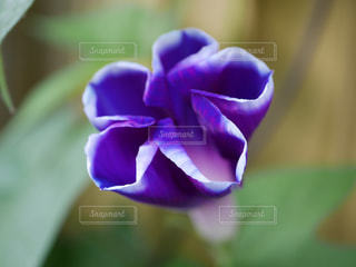 花の写真・画像素材[1350589]