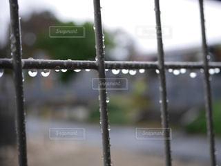 雨の写真・画像素材[1574041]