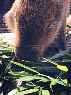 近くに動物のアップの写真・画像素材[1357294]