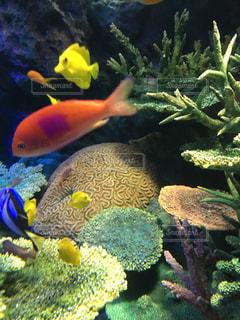 サンシャイン水族館の写真・画像素材[1356657]