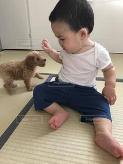 犬を保持している小さな男の子の写真・画像素材[1333552]