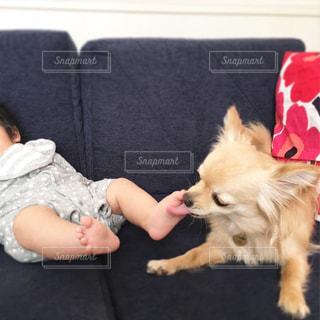 犬の写真・画像素材[1343409]