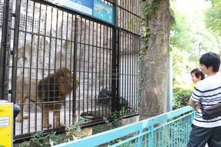 初めての動物園の写真・画像素材[1515902]