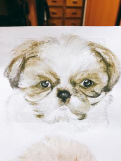 シーズー犬 イラストの写真・画像素材[1332125]