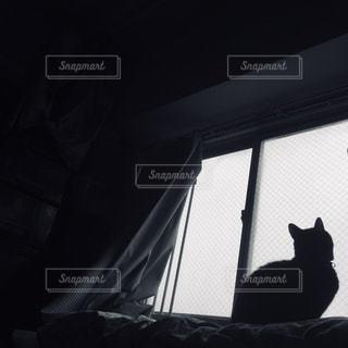 窓の前に座って黒い猫の写真・画像素材[1352884]