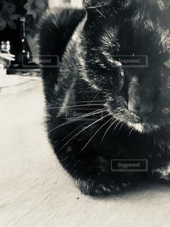 その口を開いて黒い猫の写真・画像素材[1355803]