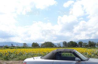 ひまわり畑と車の写真・画像素材[1377614]