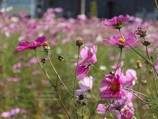 近くの花のアップの写真・画像素材[1624660]