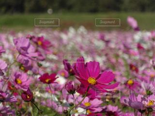 近くの花のアップの写真・画像素材[1624671]