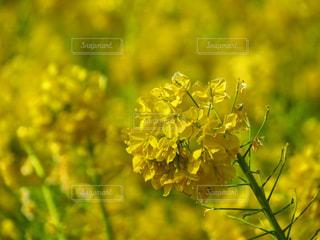 花のクローズアップの写真・画像素材[2931528]