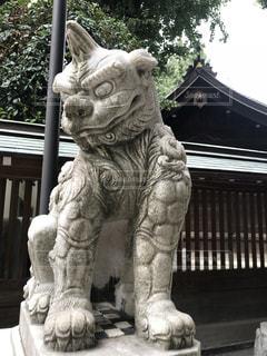 狛犬の写真・画像素材[1345475]