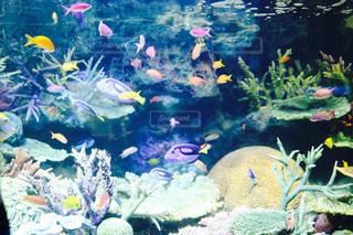 水族館の魚の写真・画像素材[1374775]