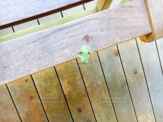 カエルの写真・画像素材[1414421]
