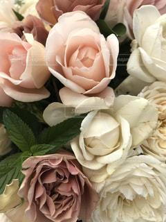 近くの花のアップの写真・画像素材[1333393]