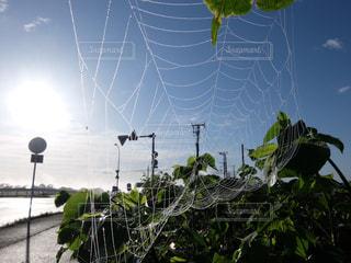 クモの巣の写真・画像素材[1343056]