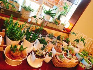 テーブルの上の多肉植物達🌵の写真・画像素材[1335001]