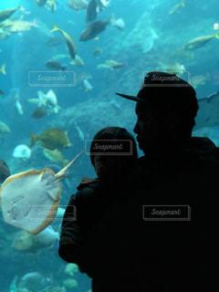 海底気分の写真・画像素材[1333847]