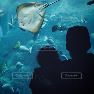水族館の写真・画像素材[1333850]