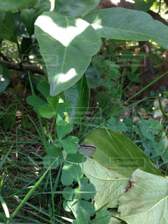 近くの緑の植物をの写真・画像素材[1359886]