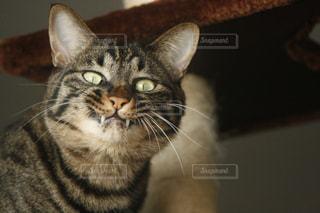 猫の威嚇?の写真・画像素材[1346430]