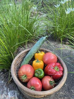 夏の家庭菜園の収穫の写真・画像素材[3561398]