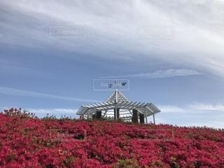 つつじと見晴台の写真・画像素材[2071604]