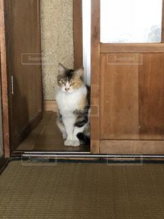 ドアの横に座っている猫の写真・画像素材[1336549]