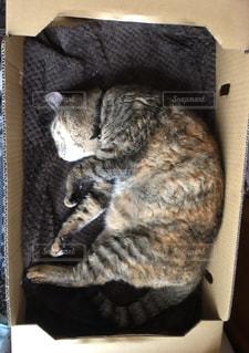 ボックスで眠っている猫の写真・画像素材[1361491]