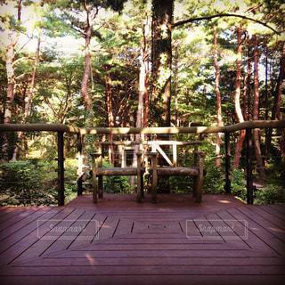 森の中の椅子の写真・画像素材[1342976]