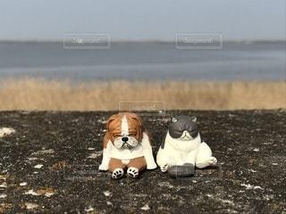 お出かけ犬猫さん2の写真・画像素材[1375990]