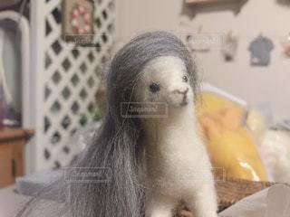 ロン毛のアルパカさんの写真・画像素材[1338508]