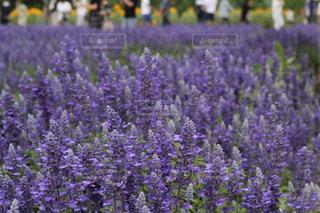 近くの花のアップの写真・画像素材[1338459]