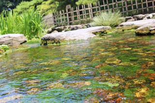 池のアップの写真・画像素材[1338817]