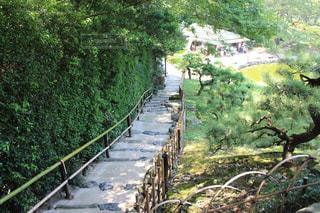 日本庭園の写真・画像素材[1338819]