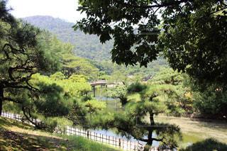 高松 栗林公園の写真・画像素材[1338821]