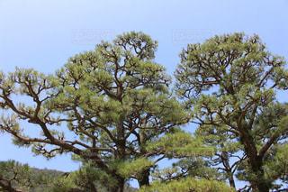 高松 栗林公園の写真・画像素材[1338910]