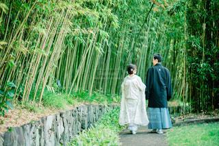 和装前撮り 竹林公園の写真・画像素材[1397222]