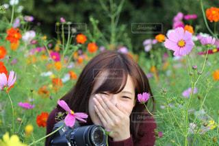 コスモス畑と女性の写真・画像素材[1558548]