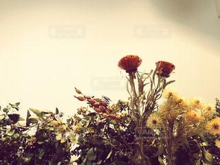 秋の花のドライフラワーの写真・画像素材[1600665]