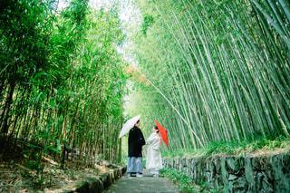京都での和装前撮りの写真・画像素材[1633904]