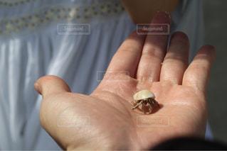 手のひらに乗ったヤドカリの写真・画像素材[1655872]