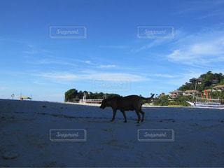 ビーチを歩く犬の写真・画像素材[1686444]