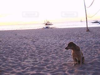 砂浜の上に座っている犬の写真・画像素材[1688561]
