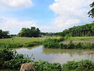 バングラデシュの風景の写真・画像素材[1691640]