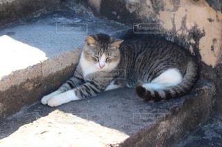 地面に横になっている猫の写真・画像素材[1811303]