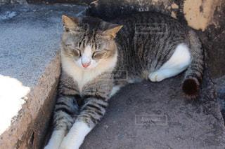 地面に横になっている猫の写真・画像素材[1811307]